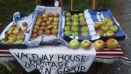 Heritage apples for sale